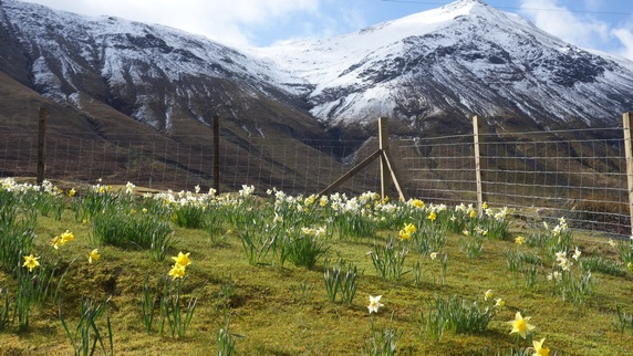 Glamaig from the garden in spring